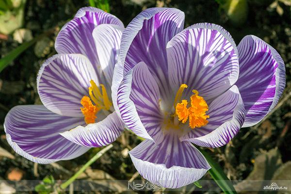 Цветы, которые любит Бог - фото